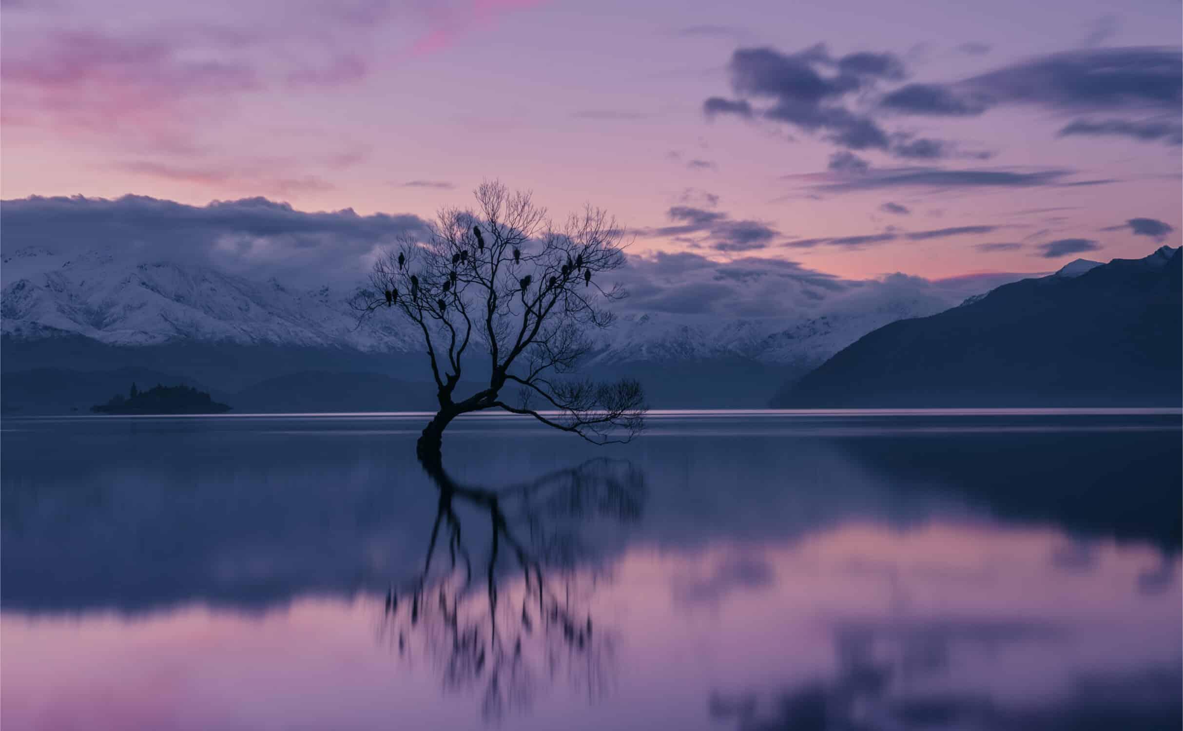 Wanaka Tree im Lake Wanaka