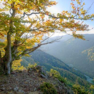 Blick über Tal im Herbst