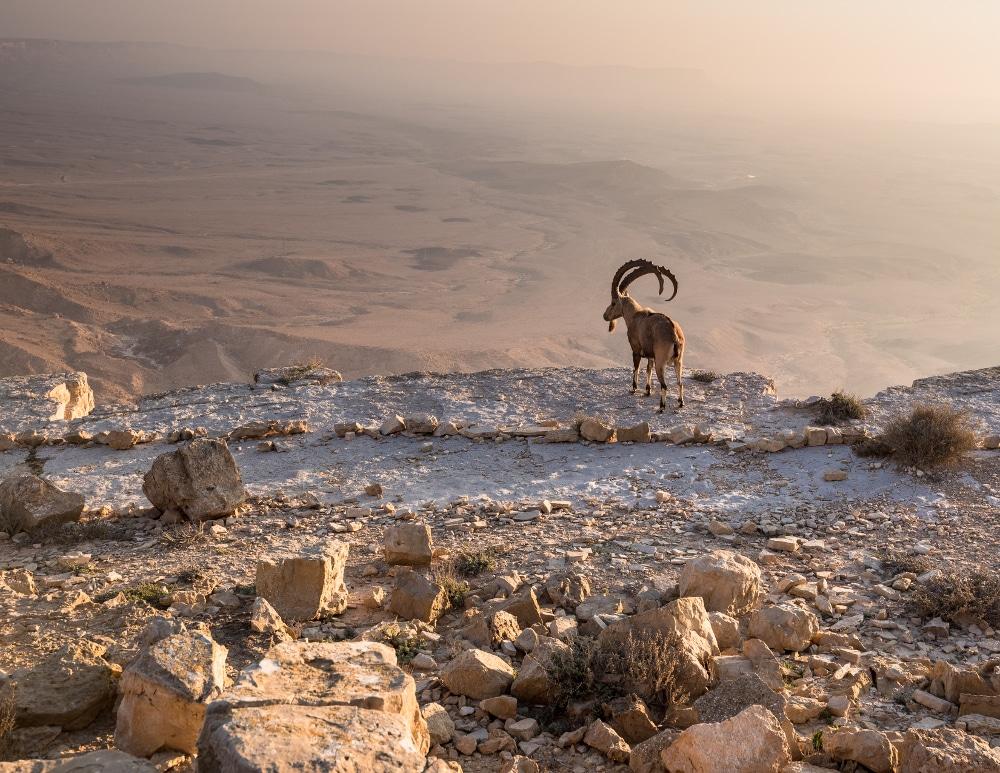 ramon krater negev wüste israel