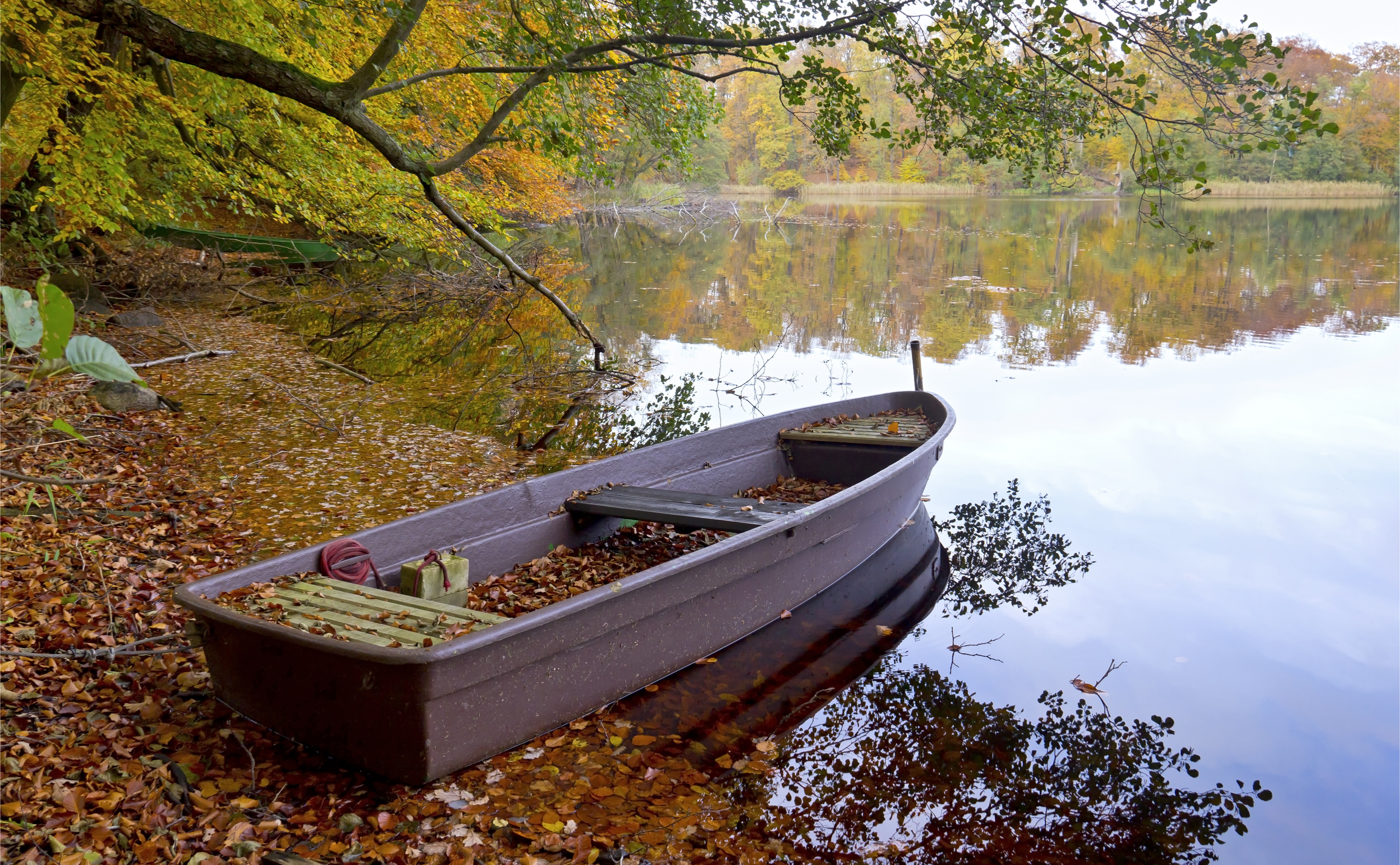 Herbstliches Seeufer in Brandenburg
