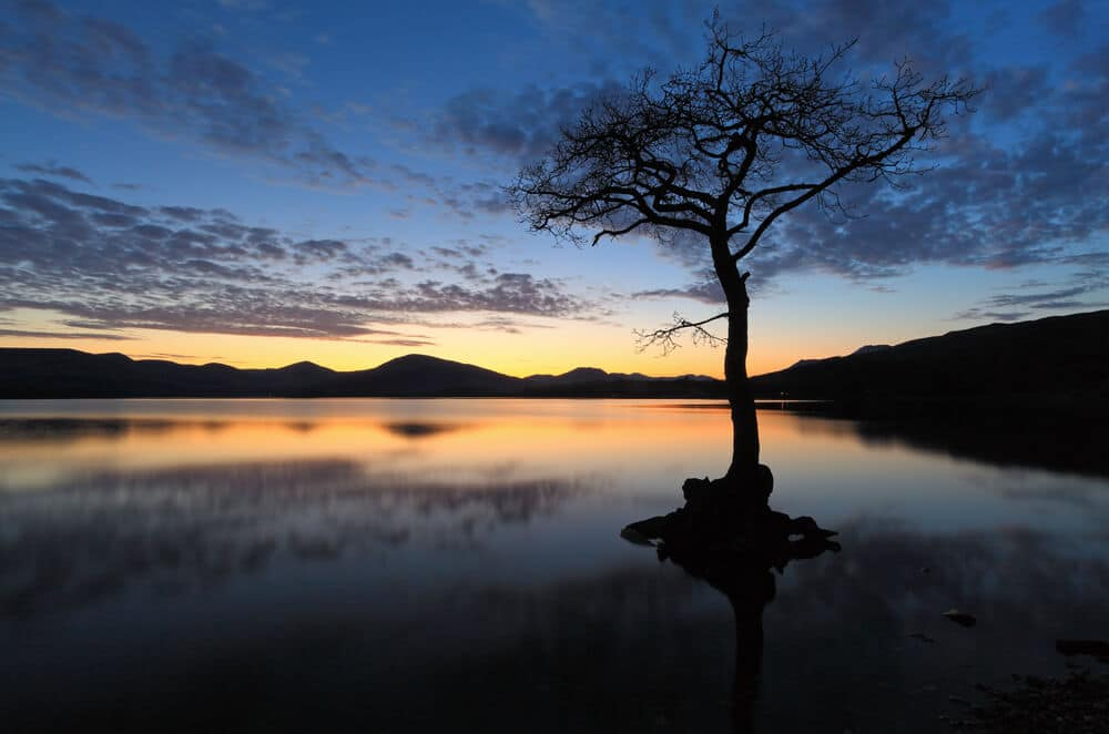 Der einsame Baum in Lock Lomond © Targn Pleiades / Shutterstock