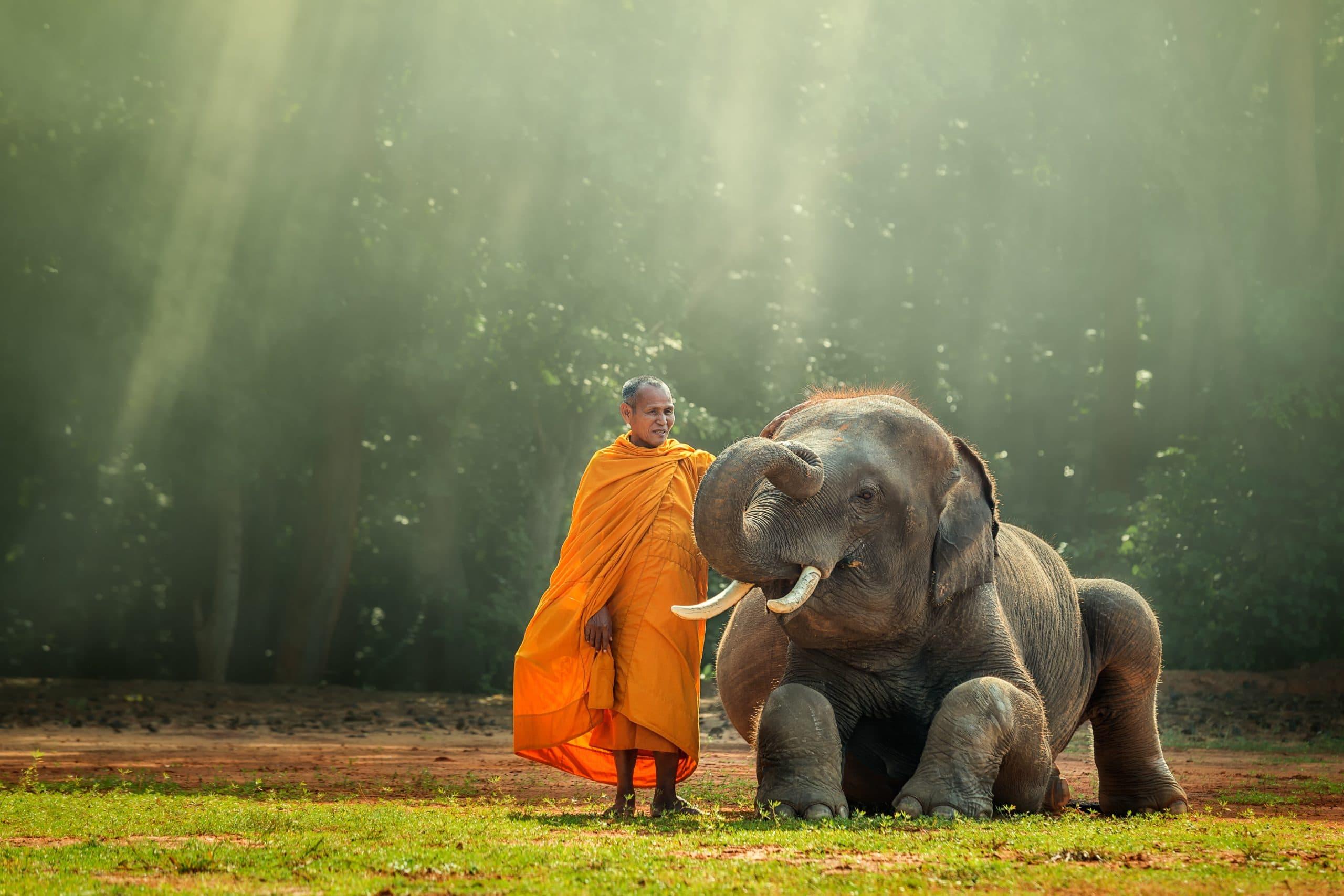 mönche myanmar elefant