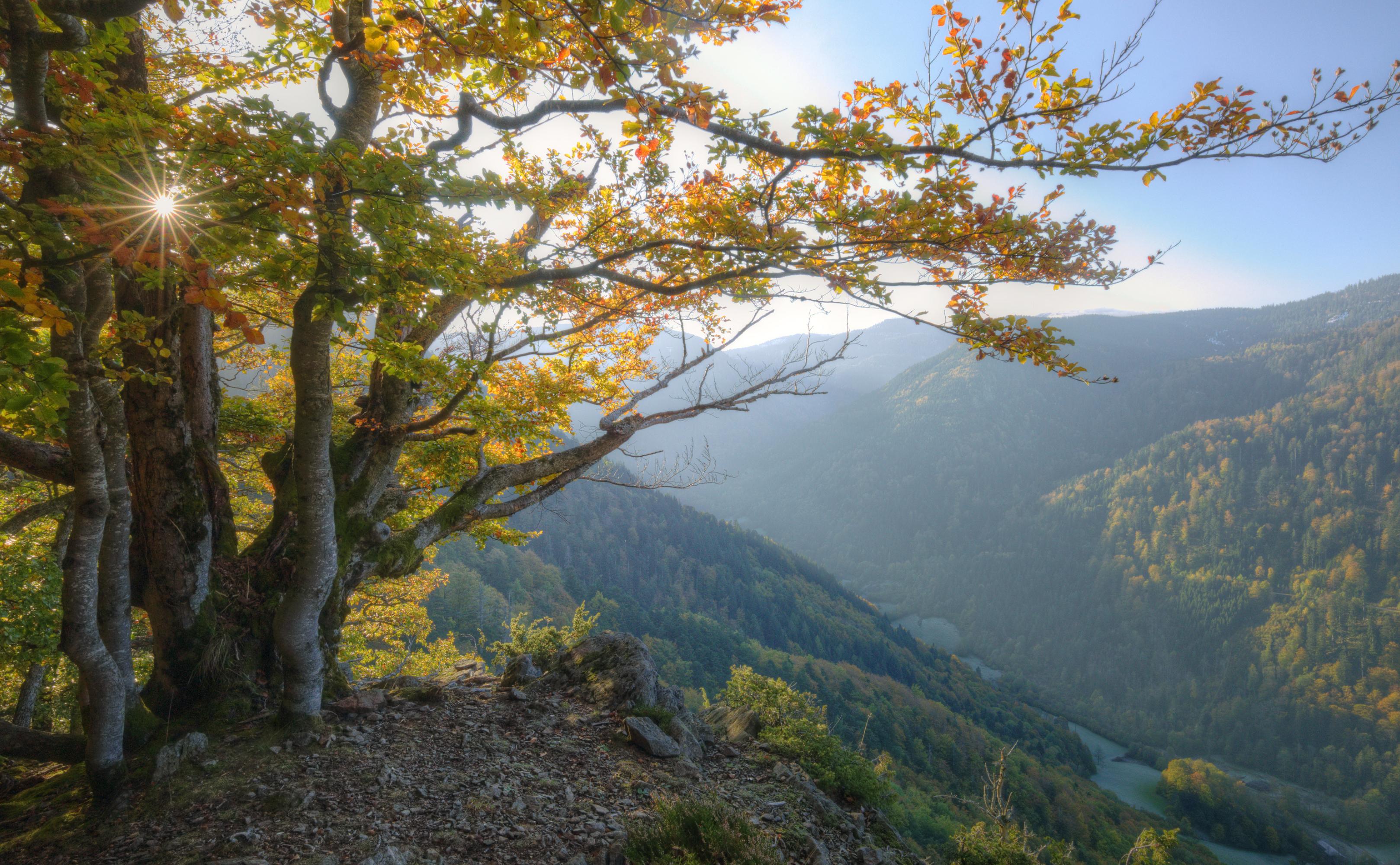 Schluchtensteig/Schwarzwald im Herbst