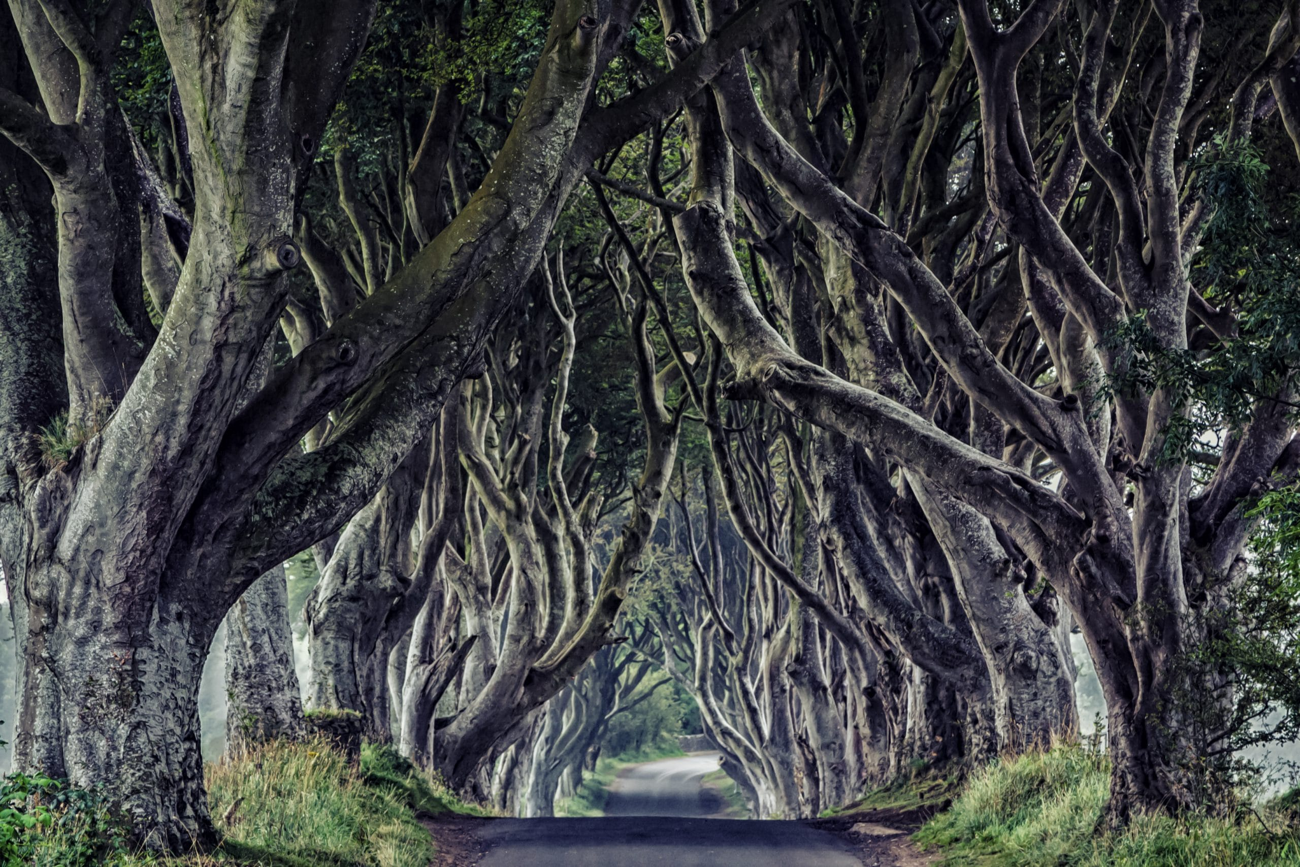 game of thrones dark hedges kingsroad